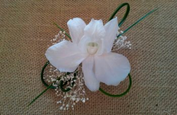 prendido orquídea dendro